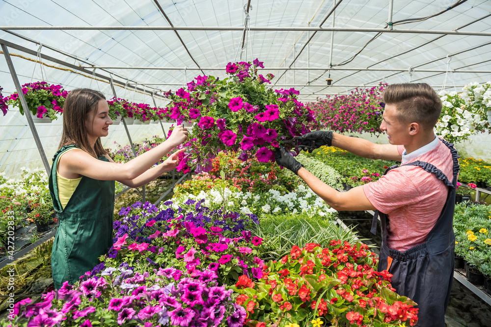 Fototapeta Young couple florists working with flowers and plants in the greenhouse