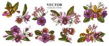 Flower Bouquet Of Colored Laelia, Feijoa Flowers, Glory Bush, Papilio Torquatus, Cinchona, Cattleya Aclandiae