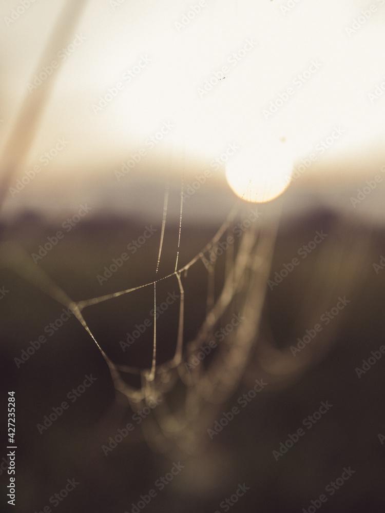 Fototapeta Wschód słońca na łące