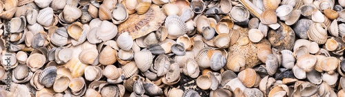 Fotografia a collection of seashells for panorama, border or banner