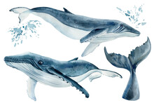 Set Os Whales On Isolated White Background, Watercolor Illustration. Blue Whale