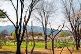 Fototapeta Sawanna - Spring of Seoul grand park in Gwacheon, Korea