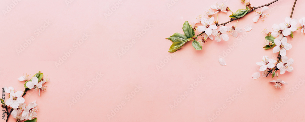 Fototapeta Spring background pink with flower blossom and April floral nature in beautiful scene with blooming tree. Easter Sunny day. Orchard abstract blurred background. Springtime.