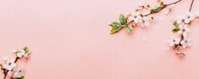 Spring Background Pink With Flower Blossom And April Floral Nature In Beautiful Scene With Blooming Tree. Easter Sunny Day. Orchard Abstract Blurred Background. Springtime.