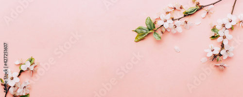 Fotografija Spring background pink with flower blossom and April floral nature in beautiful scene with blooming tree
