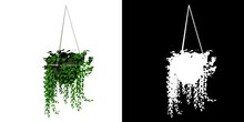 Front View Of Plant (hanging Pot With Indoor Plant 1) Tree Png With Alpha Channel To Cutout Made With 3D Render