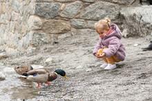 Little Blonde Girl Feeding Some Ducks In The River