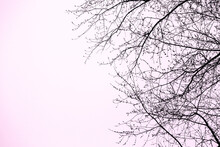Pink Sky With Tree