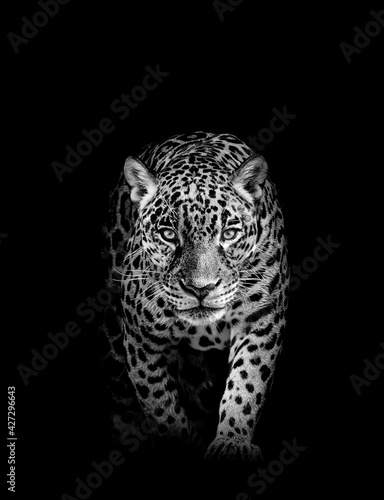 Leopard face profile , animal abstract	 - fototapety na wymiar