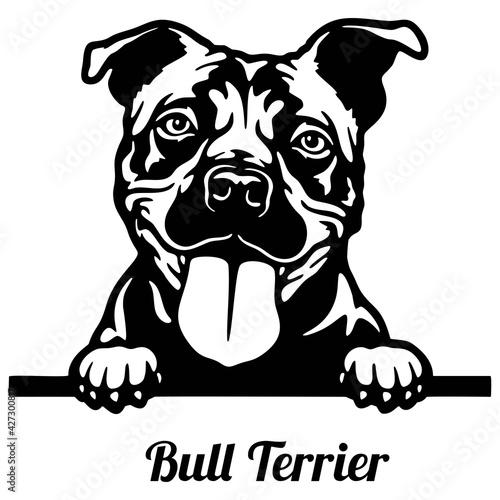 Obraz Bull Terrier Peeking Dog - head isolated on white - fototapety do salonu