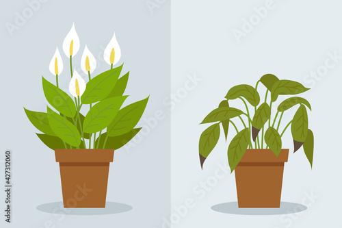 Obraz na plátně Plant withering