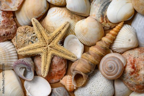 Fototapeta Seashells of various shapes and types. Background