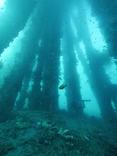 Underwater View Of An Underside Pier With Fishes And Corals Growing On Post.