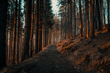 Closeup Shot Of A Narrow Pathway In The Forest At Sunset