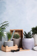 Different house plants in pots with gardening tools on white table