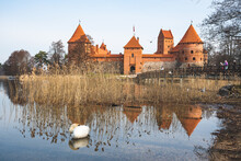 Medieval Castle Of Trakai, Vilnius, Lithuania, Eastern Europe, Located Between Beautiful Lakes And Nature With Swan Sleeping Among Reeds