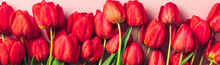 Row Of Red Tulips On Pink Background With Space For Text, Message Mother's Day, Hello Spring Concept Holiday Card Flat Lay Top View Banner