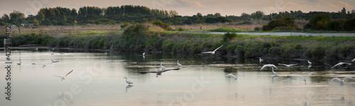 Fotografie, Obraz Oiseaux dans les marais