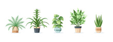 Set Of Home Plants In Pots Isolated On White Background In Flat Style. Vector Illustration
