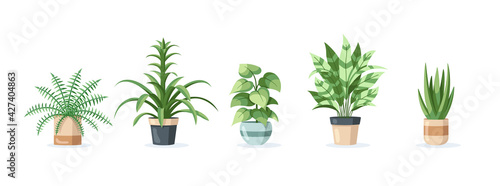 Obraz na plátně Set of home plants in pots isolated on white background in flat style