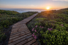 Wooden Boardwalk Through Fynbos And Sand Dunes Leading To The Ocean, Yzerfontein, Cape Town, Western Cape, South Africa