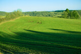 Fototapeta Kuchnia - Spring landscape background with blue sky and green grass field.