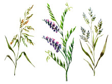 Wildflowers. Three Stems Of Different Field Grasses On A White Background. Elements Of Nature For Design. Watercolor.