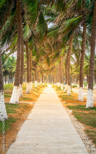Canvas Print Vertical walk way view along many coconut trees and dramatic light on Haikou bea