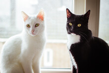 A Black And White Cat Sitting On A Window Sill Next To A White Cat