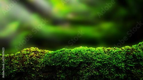 Fotografia closeup or macro beautiful moss in forest background