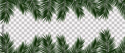 Fototapeta Realistic tropical leaves on transparent background, vector illustration obraz