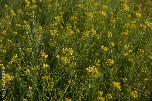 Obraz kwiat roślina wiosna natura płatki łąka - fototapety do salonu