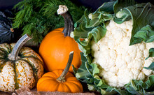 Various Pumpkins And Cauliflower In A Tray. Autumn Harvest