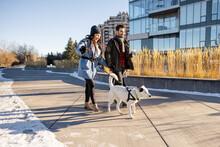 Couple Walking Dog On Leash In Sunny Urban Winter Park