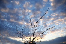 Silhouette Of Thorny Bush And Beautiful Cloudy Sky On Background