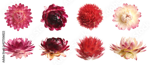 Set with beautiful dry flowers on white background, banner design Fototapet