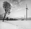 Drzewa i wiatraki