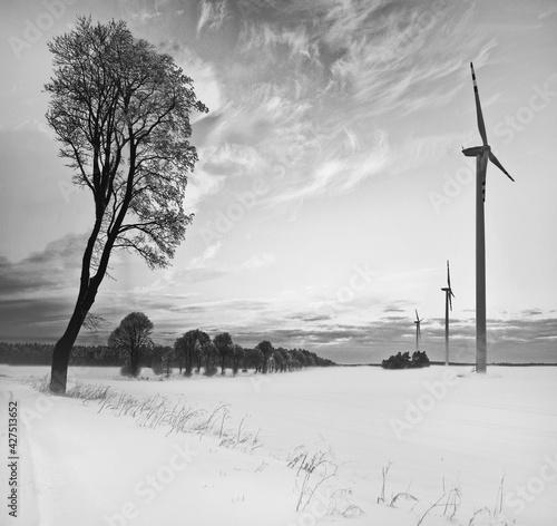 Fototapeta Drzewa i wiatraki obraz