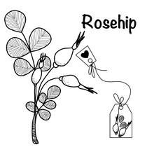 Vector Illustration Of A Tea Herbs Rosehip And Tea Bag  Sketch Elements For Labels, Packaging And Postcard Design. Herbal Tea With Rose Hips, Dog Rose