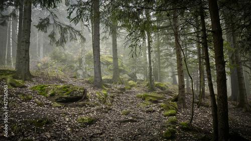 Fototapeta Zielone skałki - The green rocks obraz