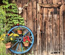 Deer Antlers Skull And A Blue Wheel With Flowerpots Hanging On A Wooden Wall