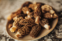 A Close Up Shot Of Raw Organic Morel Mushrooms. Concept Of Gourmet Food And French Cuisine
