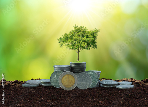 Canvas-taulu Money growth concept , Step of coins stacks with tree growing on top , thai baht