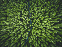 Aerial Top View Of  Green Trees In Forest In Slovakia. Drone Photography. Rainforest Ecosystem And Healthy Environment Concept