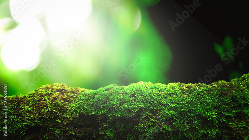 closeup or macro beautiful moss in forest background - fototapety na wymiar
