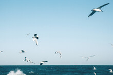 Many Seagulls Hover In The Blue Bright Sky. Skyline Background. Beautiful White Clouds In The Sky. Horizon Of The Sea