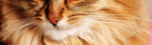 Fragment Of Portrait Of Cat. Cat's Nose And Mustache. Selective Focus. Horizontal Image.