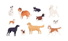Dogs Of Different Canine Breeds Isolated On White Background. Doggy Pets Such As Royal Poodle, French Bulldog, Collie, Beagle, Retriever, Akita, Springer Spaniel. Colored Flat Vector Illustration