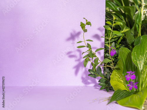 Obraz Minimalist botanical background with copy space. Creative showcase with fresh plants for product demonstration, promotion sale, packaging presentation or merchandise. Light and shadow. Front view. - fototapety do salonu