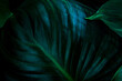 closeup nature view of green leaves background, dark nature concept